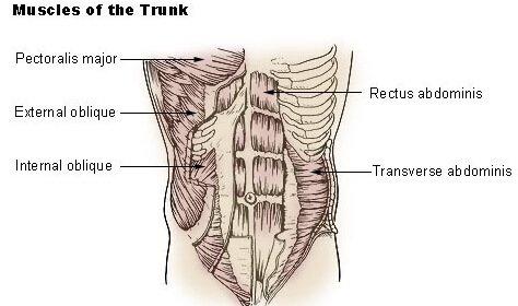 כאבי גב ושרירי הבטן