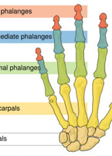פציעת תסמונת תעלה קרפלית (carpal tunnel syndrome)